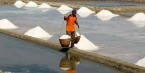Harga Garam Naik, Pemerintah Dianggap Tidak Berdayakan Petani Garam