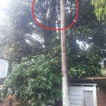 Lampu Jalan Rusak Bertahun Tahun, Warga PLN Luwu Timur Tidak Ada Inisiatifnya
