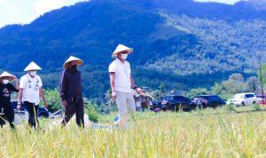 Bupati Lutim Apresiasi Penggunaan pupuk Organik ECO Farming untuk Padi
